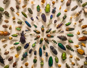insectos activan sensor de movimiento